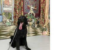 Hund im Wohnraum