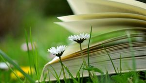 Ein offenes Buch in der Wiese