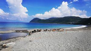 Ziegen in Taiwan, Foto von Lisa Prem.